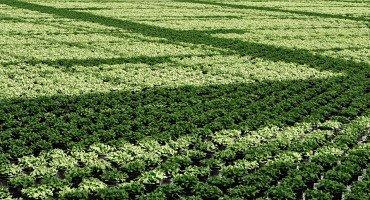 Sveriges ört och sallatsodlare använder naturliga metoder för att ört- och sallatsplantorna ska få växa i sin egen takt.